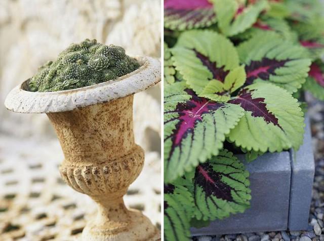 вазы для растений