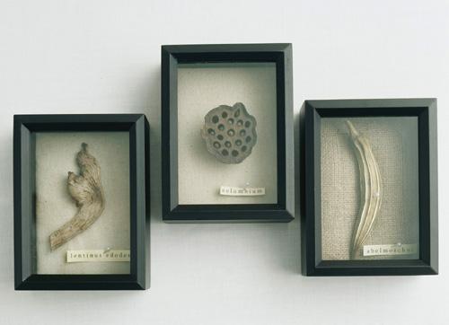 дары природы в рамке, декор стен своими руками