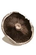шапка гриба