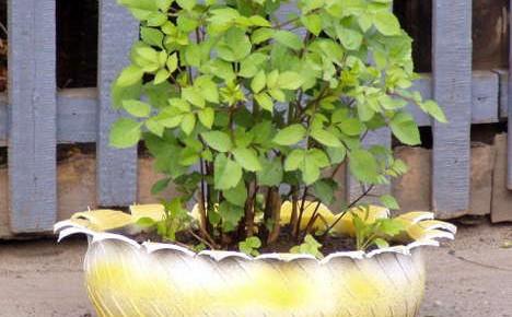 Клумбы для сада из старых шин