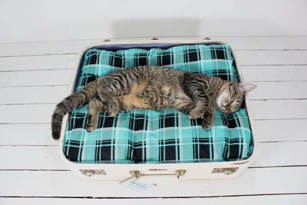 Чемодан для кошки своими руками