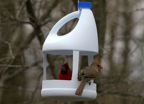 кормушка для птиц из пластиковой бутылки из-под бытовой химии