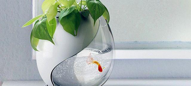Один горшок - две жизни: синтез аквариума и цветочного горшка