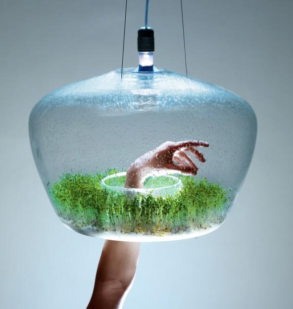 потолочный светильник glasshouse с растениями