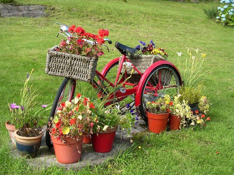 старый велосипед как клумба в саду