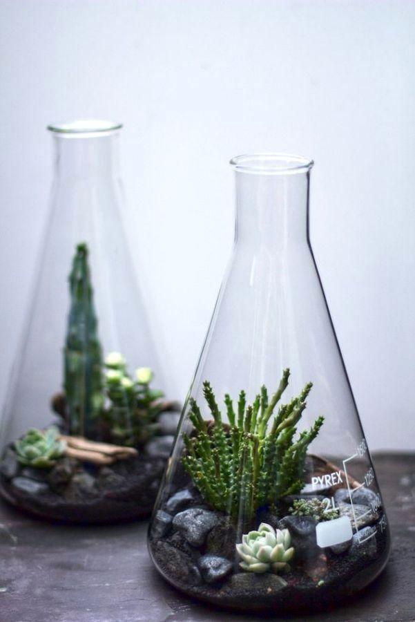 флорариум в колбе