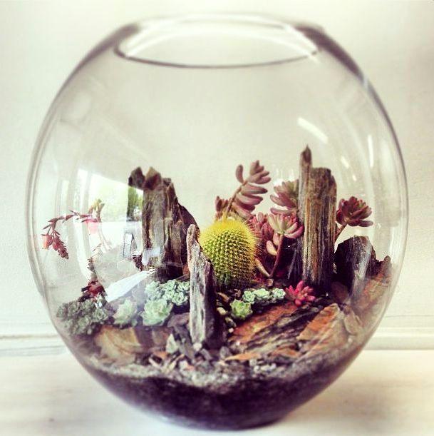 Кактусы в аквариуме