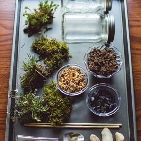 флорариум своими руками в банке