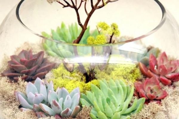 флорариум с мохом и суккулентами