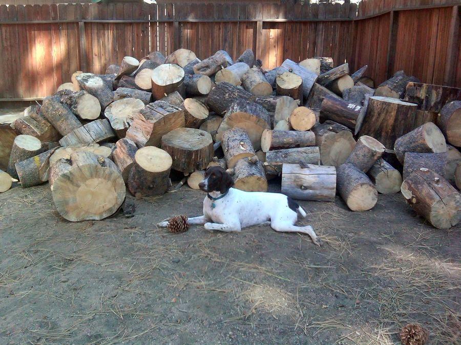 Кот из спилов