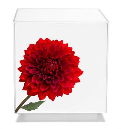 floral-art-05