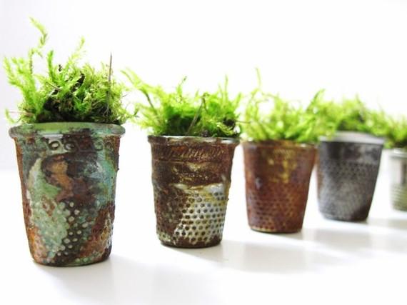 растения в наперстках: миниатюрный сад