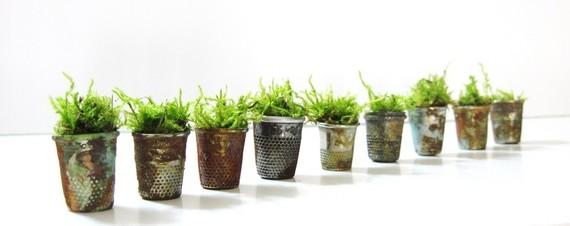 растения в наперстках