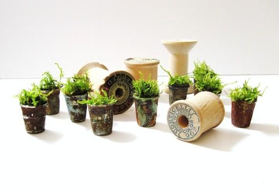 миниатюрный сад в наперстках