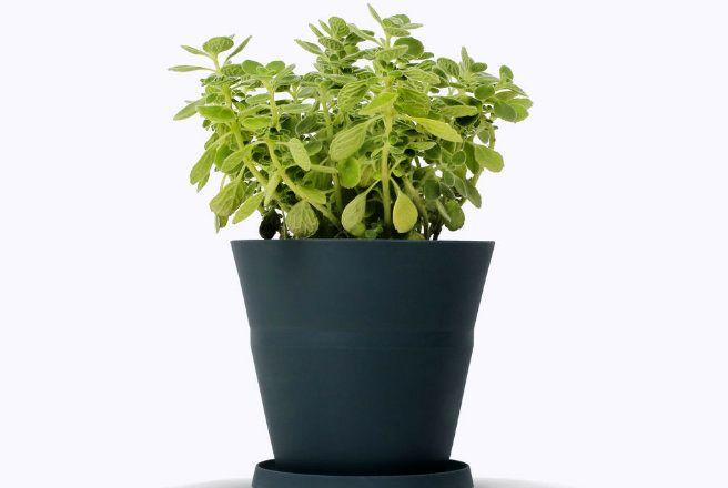 горшки которые растут вместе с растениями