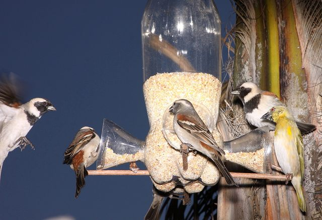 кормушка для птиц с дозатором