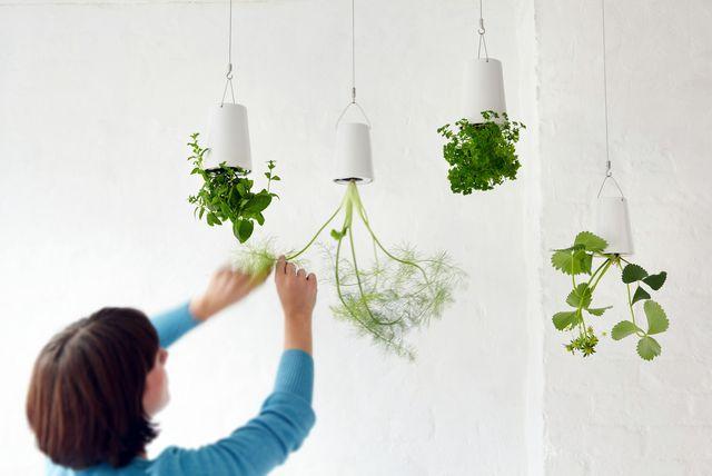 подвесной перевернутый сад sky planter