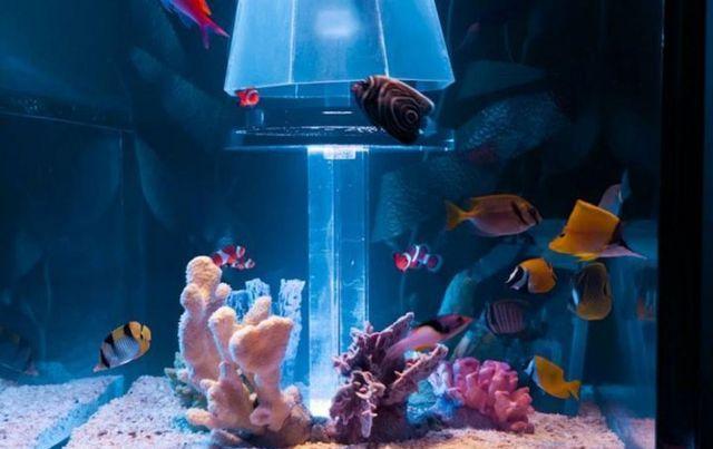 детали аквариум в спальне в изголовье кровати