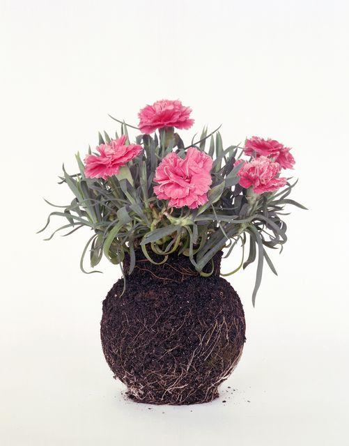 оригинальные комнатные растения без горшка
