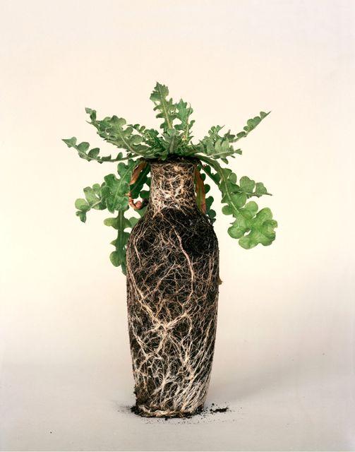 оригинальные комнатные растения без сосуда