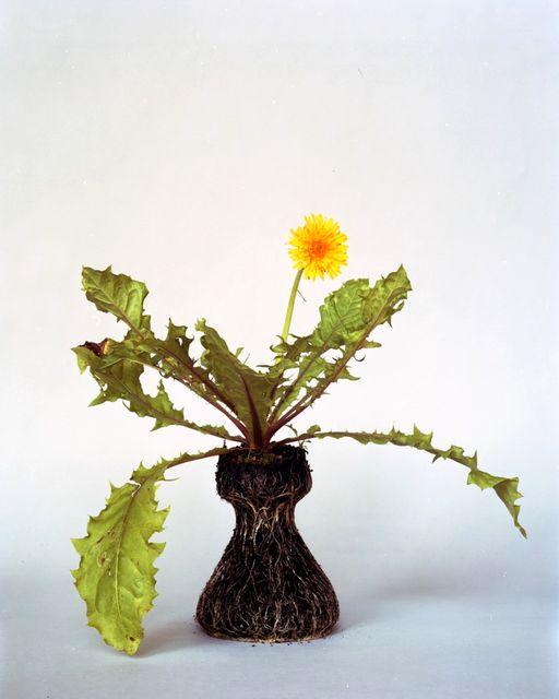 оригинальные комнатные растения без вазона