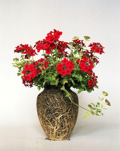 оригинальные комнатные растения без вазы
