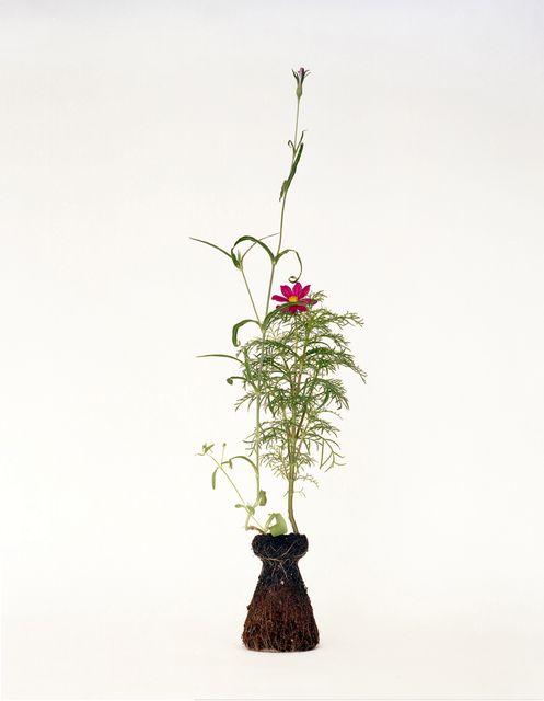комнатные растения без горшков