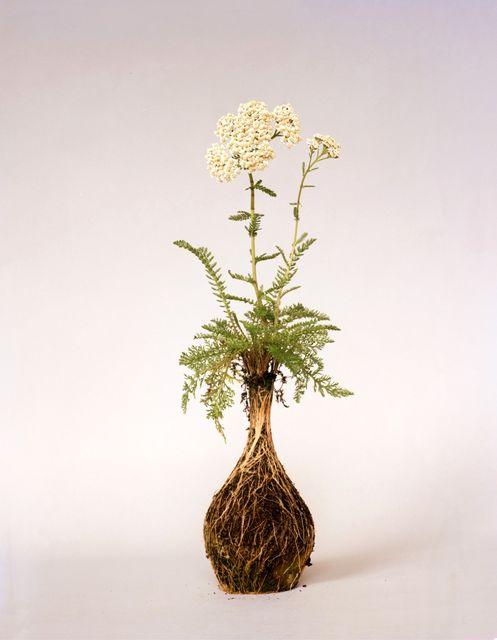 растения с почвой без горшка nurture studies