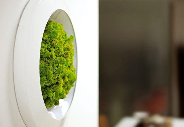 декоративный мох в интерьере Moss Design
