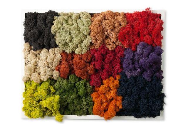 разноцветный декоративный мох проект Moss Design