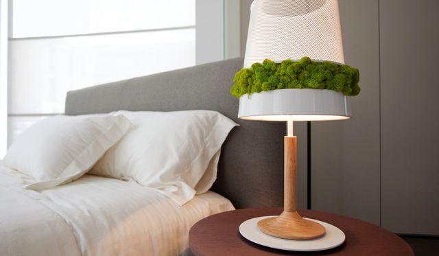 декоративный мох в настольной лампе
