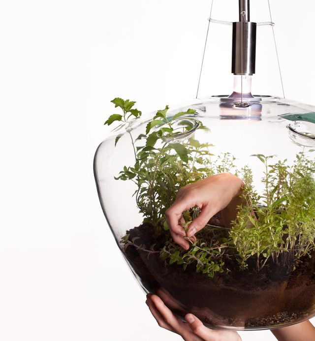 лампа для растений в интерьере