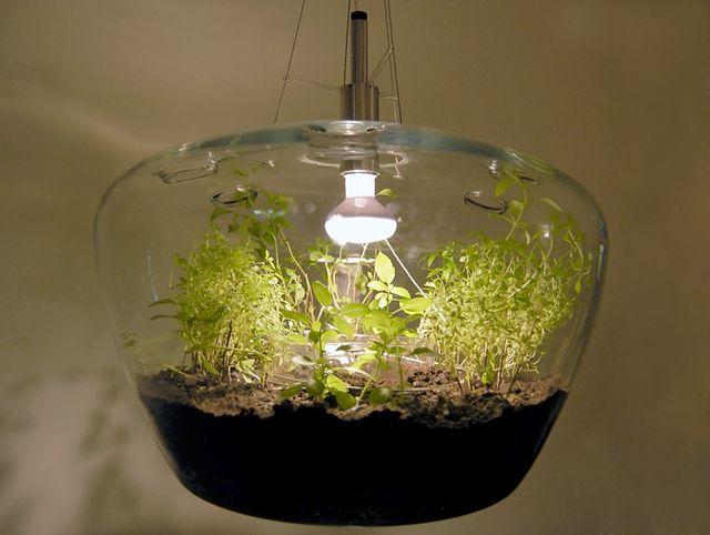 светильник - лампа для растений