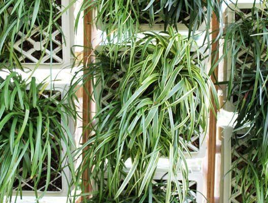 растения в беседке- павильоне