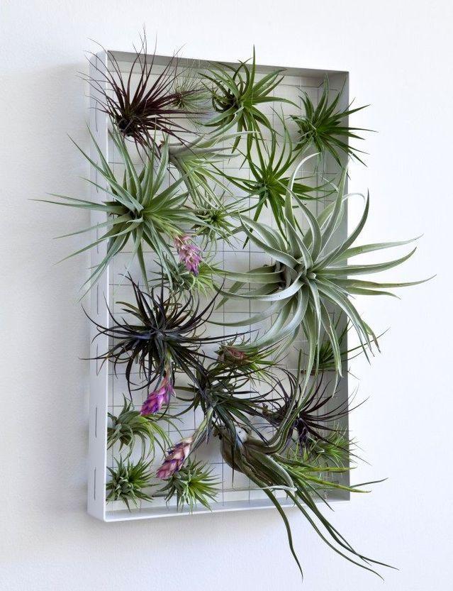вертикальный сад в раме на стене