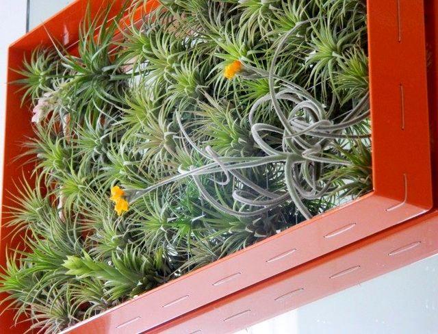 вертикальный сад тилландсии в интерьере