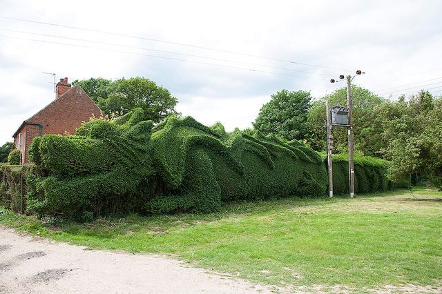 живая изгородь в виде дракона