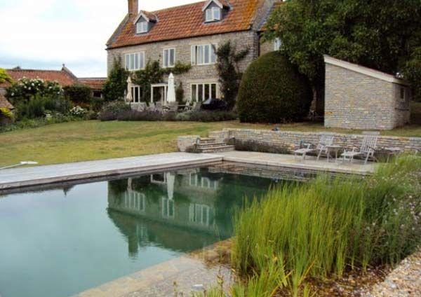 пруд бассейн с растениями