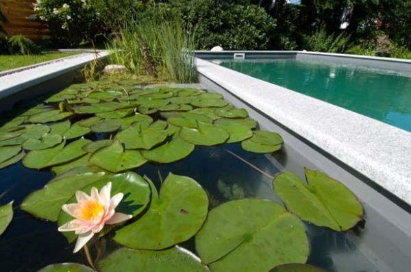 пруд бассейн с кувшинками