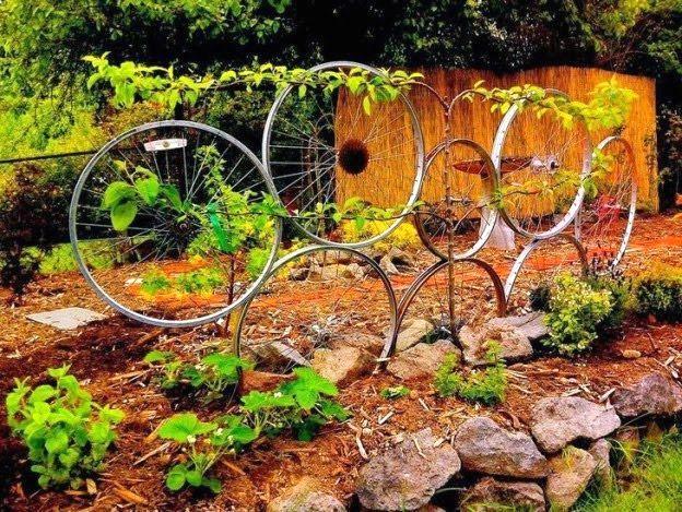 велосипедные колеса как опора для вьющихся растений в саду