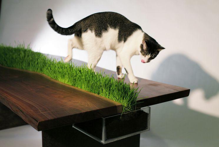 стол с контейнером, в котором растет трава